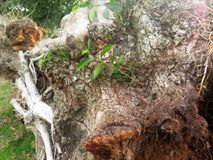 Estoque do fundo da casca de árvore imagem de stock royalty free