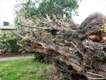 Estoque do fundo da casca de árvore foto de stock royalty free