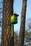 Estornino-casa en un árbol de pino. Fotografía de archivo