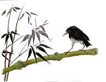 estornino que se sienta en bambú Fotografía de archivo libre de regalías