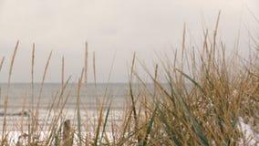 Estorno coberto com o período do inverno da neve na costa de mar Báltico vídeos de arquivo