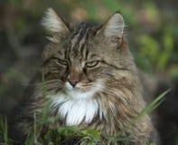 Estrabismo del gato Imágenes de archivo libres de regalías