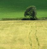 Estrada à árvore Fotografia de Stock