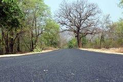 Estrada à floresta Imagens de Stock Royalty Free