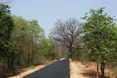 Estrada à floresta foto de stock