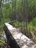 Estrada à floresta dos manguezais, Songkhla, Tailândia foto de stock