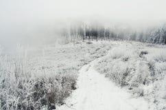 Estrada à floresta nevoenta do inverno com neve Fotos de Stock Royalty Free