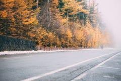Estrada à montanha com pinheiros do outono, vista de Fuji da linha 5a estação de Fuji Subaru, Japão foto de stock