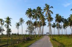 Estrada à praia e às palmeiras Foto de Stock