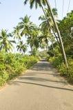 A estrada à selva Fotografia de Stock