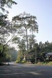 Estrada à selva Imagem de Stock Royalty Free