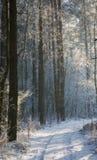Estrada à terra com a trilha pela floresta nevado do wintertime Fotos de Stock Royalty Free