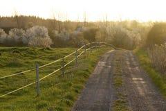 A estrada às árvores da madeira da cereja Imagens de Stock