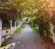 Estrada, árvores e grama de pedra Fotografia de Stock Royalty Free