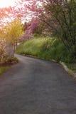 Estrada, árvores e grama de pedra Fotos de Stock