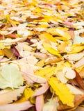 A estrada é coberta com as folhas do amarelo do outono foto de stock