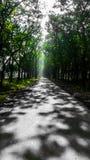 A estrada Foto de Stock Royalty Free
