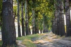 Estrada aberta da árvore Fotos de Stock Royalty Free