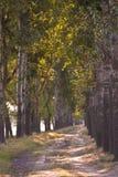 Estrada aberta da árvore Foto de Stock Royalty Free