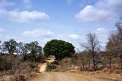 Estrada africana do arbusto Fotos de Stock Royalty Free
