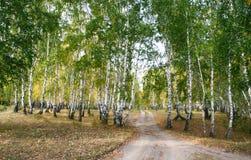 Estrada além das árvores Fotografia de Stock