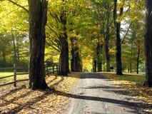 Estrada alinhada árvore Fotos de Stock Royalty Free