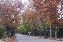 Estrada alinhada árvore no outono Imagens de Stock
