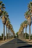 Estrada alinhada nas palmeiras Fotografia de Stock