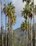 Estrada alinhada palmeira Imagem de Stock Royalty Free