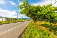 Estrada ao chiriqui Panamá do boquete Imagem de Stock Royalty Free