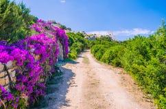 A estrada ao farol com lilás brilhante floresce o lado, Porto Rafael, Palau, Sardinia, Itália imagem de stock
