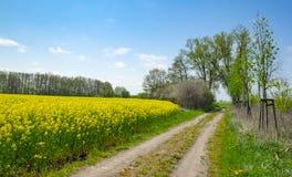 Estrada ao lado do campo do canola na ilha Usedom, Alemanha imagem de stock