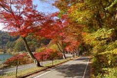 Estrada ao lado do lago com a folha da árvore do outono Fotos de Stock Royalty Free