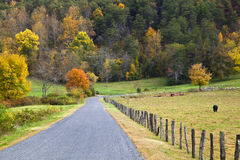 Estrada ao lado do pasto da vaca Imagens de Stock Royalty Free