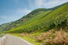 A estrada ao lado dos vinhedos Imagens de Stock Royalty Free