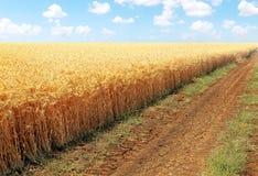 Estrada ao longo da borda de um campo wheaten Imagens de Stock Royalty Free