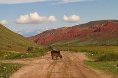 A estrada ao longo das montanhas vermelhas Imagens de Stock Royalty Free
