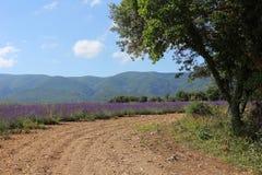 Estrada ao longo do campo da alfazema Imagens de Stock