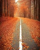 Estrada ao outono fotos de stock