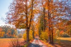 A estrada ao outono imagens de stock royalty free