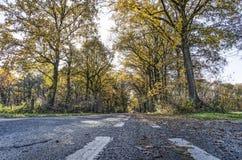 estrada asfaltada Árvore-alinhada fotografia de stock royalty free