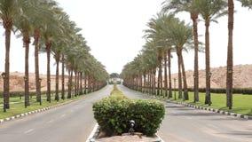 A estrada asfaltada agradável alinhou com as palmeiras nos lados em Egito filme