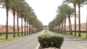 A estrada asfaltada agradável alinhou com as palmeiras nos lados em Egito vídeos de arquivo