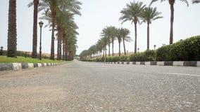 A estrada asfaltada agradável alinhou com as palmeiras nos lados em Egito video estoque