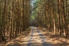 Estrada asfaltada através da floresta imagem de stock