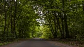 Estrada asfaltada através da floresta Fotos de Stock