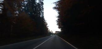 Estrada asfaltada através da floresta fotos de stock royalty free