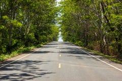 Estrada asfaltada e árvores verdes. Foto de Stock Royalty Free