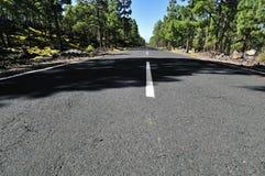Estrada asfaltada e floresta Imagem de Stock Royalty Free