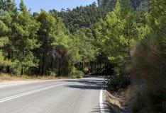 Estrada asfaltada entre os pinhos Imagens de Stock